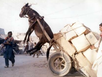 Overloaded Mule